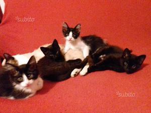Gattini di pochi mesi