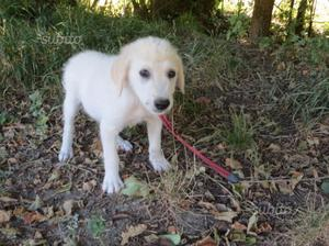 In adozione Grisoù cucciolo di tre mesi tg media