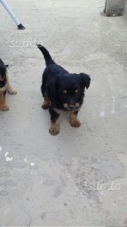 Regalasi cuccioli