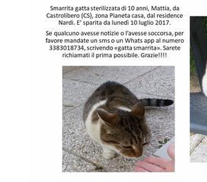 Smarrita gatta sterilizzata di dieci anni a Castrolibero