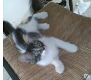 Regalo dolce gattina di soli 3 mesi