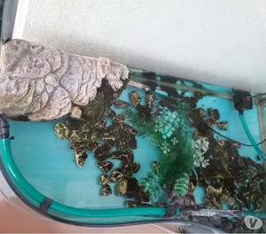 Tartarughe d acqua con tartarughiera posot class for Filtro acqua tartarughe