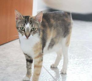 Anne, dolcissima gattina di 1 anno cerca adozione per la vit