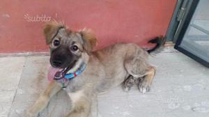 Cuccioli di 3 mesi in adozione