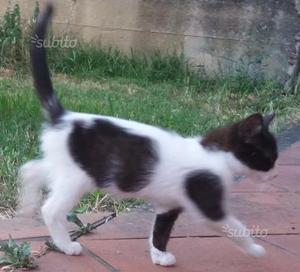 In regalo gattino bianco e nero
