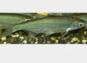 Laghetto per i pesci posot class for Pesci da esterno