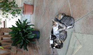 Regalo affettuosi gattini di vari colori