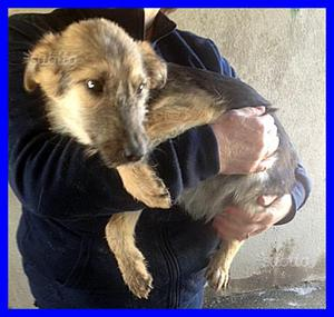 Rosa, cucciola 6 mesi taglia mediopiccola