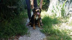 Splendido cucciolo 5 mesi in adozione gratuita