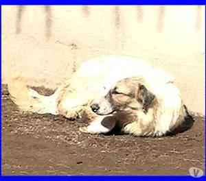 PATTY cucciolona spaventata chiede solo amore adozione del c