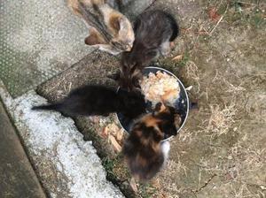 Tre gattini in regalo