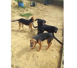 Cani di 1 anno