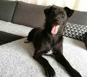 NERINA cagnolina di 1 anno taglia piccola 6 kg