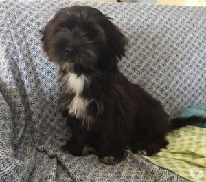 Dissy cucciolina di 4 mesi dolcissima, aspetta una famiglia