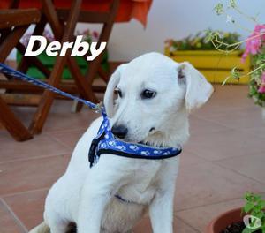 derby, cucciolo di 3 mesi in cerca di casa