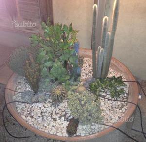 Vasi bonsai e piante grasse posot class - Vasi con piante grasse ...