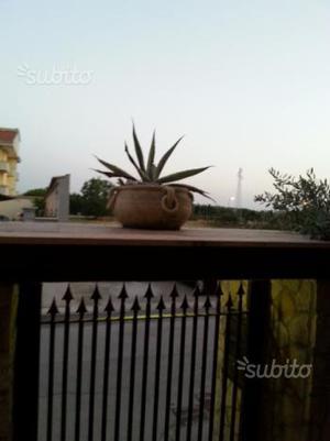 Vasi in terracotta con piante grasse