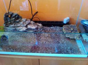 Isolotto per acquario tartarughe posot class for Acquario per tartarughe piccole