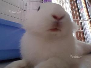 Coniglio. Adozione del cuore per nippy
