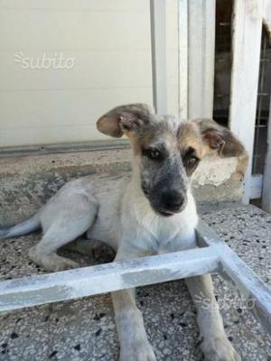 Adozione cucciola taglia media (3 mesi)