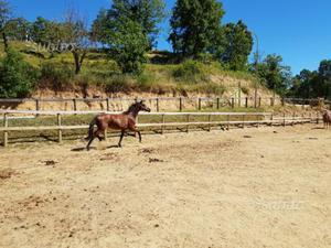 Scuderia cavalli posot class for Box cavalli usati vendo