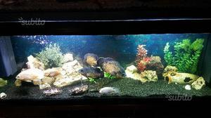 Acquario zolux nanolife kidz 8 litri posot class for Acquario 300 litri prezzo