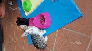 Regalasi gattini ad amante animali