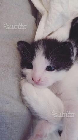 Regalo 3 gattini