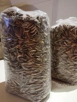 Semi di girasole per criceti e altri roditori