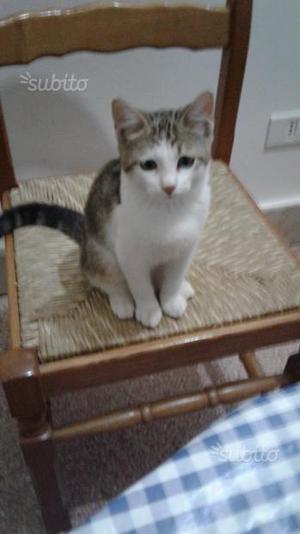 Regalo gattina