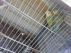 Regalo uccelli