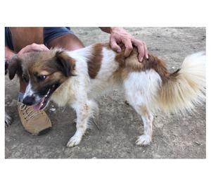 PAOLA cagnolina femmina taglia piccola 6 kg