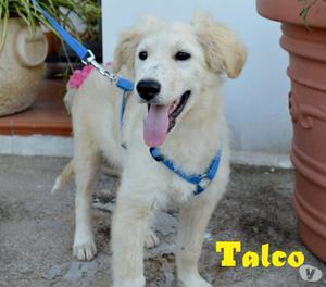 TALCO, BELLO COME IL SOLE, CERCA CASA E TANTO AMORE!