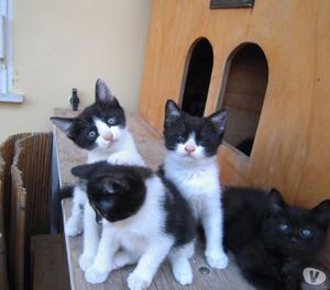 Gattini stupendi di circa due mesi