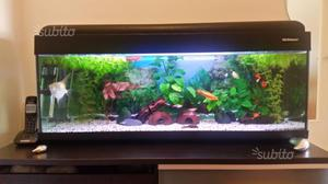 Acquario petcompany antille 100 posot class for Acquario 100 litri prezzo