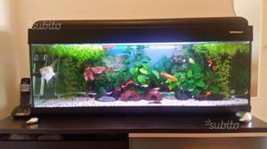 acquario petcompany antille 100 posot class