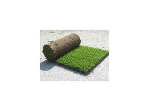 Prato gramignone e prato a tappeto