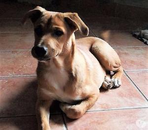 Luna, cane 5 mesi e mezzo, taglia media.