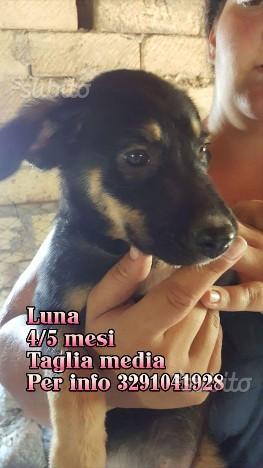 Luna 4/5 mesi taglia media