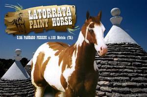 Puledri Paint-Quarter Horse da tre anni in su