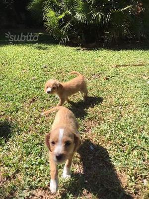 Regalo 2 cucciole di 2 mesi