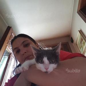 Regalo gattina di 3 mesi
