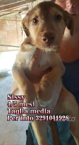 Sissy 4/5 mesi taglia media