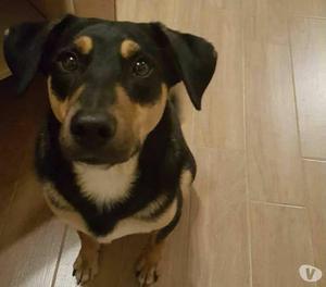 ADOZIONE dolce cucciolo 1 anno, tg media