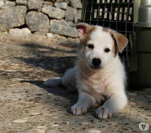 ADOZIONE stupendo cucciolo 2 mesi, taglia media