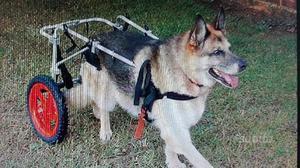 Carrello per Cani disabili taglia L