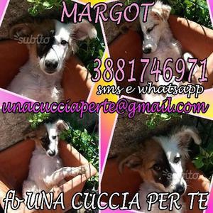 Margot cucciola 5 mesi