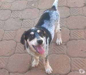 OFELIA è una cucciola femmina di 4 mesi