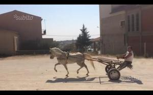 Pony di capriccio