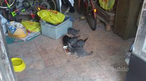 Regalo 5 gattini